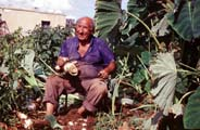 Cleaning taro in Paphos, Cyprus