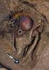 黄金の墓の発見と発掘秘話