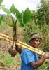 民族植物学の旅