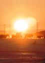ウマと暮らす―カザフスタンの草原の村から