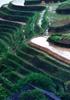 中国チワン族の棚田観光の現状