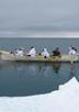 北アメリカ先住民イヌピアットとイヌイットによる捕鯨