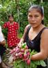 メキシコの女性たち ─ 農村開発プロジェクトから彼女たちが学んだこと